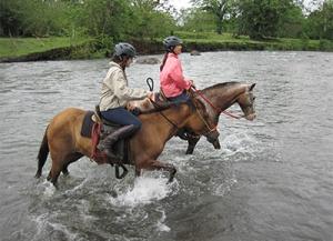 Nayara Springs Horse
